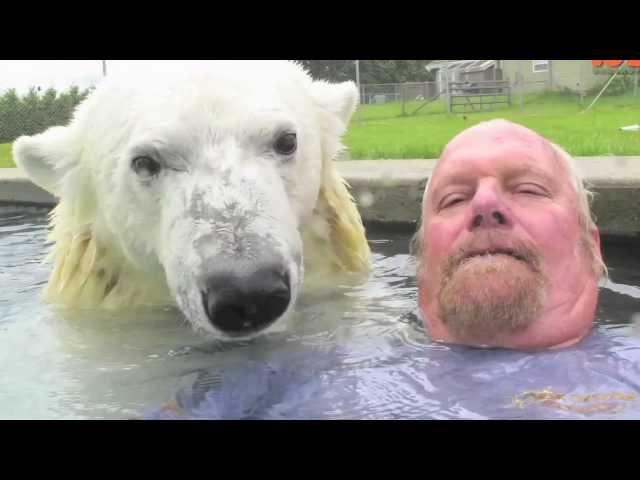 מארק שוחה עם דב קוטב