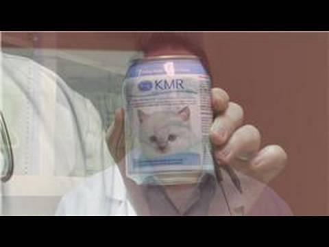 best cat probiotics