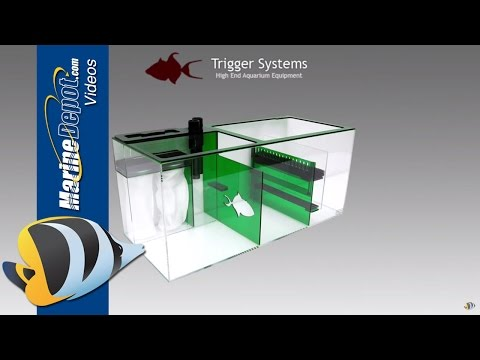 Trigger Systems Sumps: Powerhouse Filter Boxes for Your Reef Tank