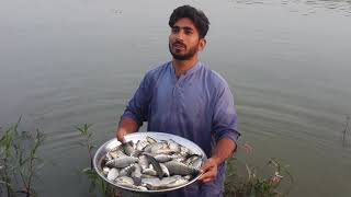 Fish catching with generator - Fish catching with electricity shock - Catching fish in village