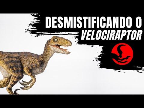 Desmistificando o Velociraptor