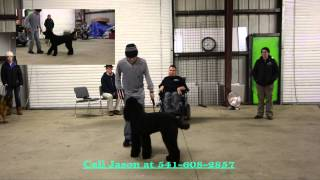 Dog Training In Medford Oregon: Teaching Walking On Leash & Heel By Jason Lake