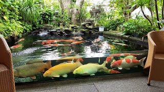 Garden Designs | TOP 3 MOST BEAUTIFUL BACKYARD FISH PONDS IN THE WORLD