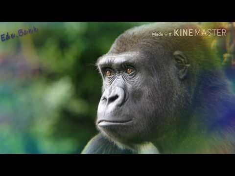 Primates: Their Evolution and Characteristics & Some Prosimians