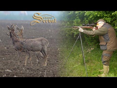 Roebock hunting in Vojvodina, Backa Palanka 2017. - Rehbockjagd in Vojvodina