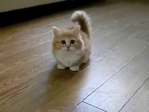 Chú mèo dễ thương nhất thế giới - Fluffy Kitten Is Confused