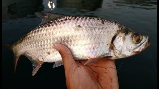 Mancing casting ikan tarpon/bulan bulan di dermaga pakai softlure - UL part 21