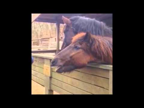 Funny talking horse Bjoern