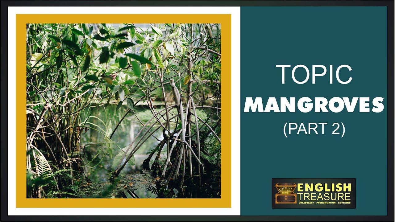 Mangroves (Part 2): English Treasure – Vocabulary, Listening, Pronunciation