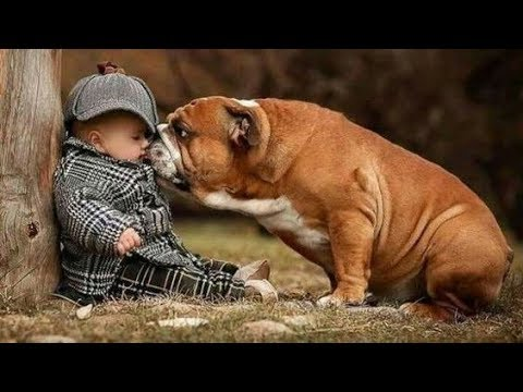 Dogs & Babies ⭐ Ultimate Loyal Protection Compilation ⭐