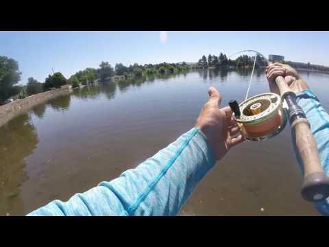 You Tube Virginia Lake Carp Episode