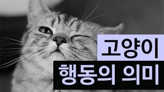 (랭킹박스) 고양이가 하는 행동의 의미