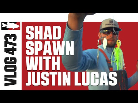 Justin Lucas Fishing Shad Spawn On Lake Guntersville - Tackle Warehouse VLOG #473