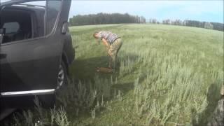 Сурок-байбак, охота в Ростовской области.