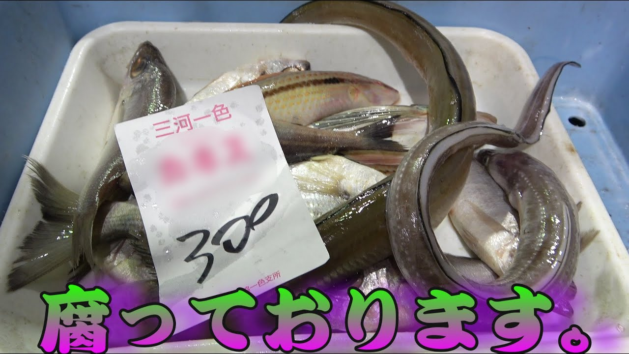 【朝市の闇】完全に腐ってる魚が格安で販売されてたので、あえて買って食べてみたら・・・