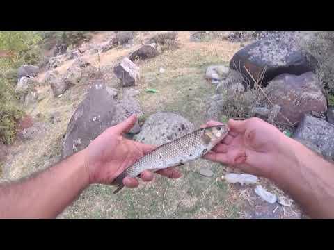 Попал на бешеный клев голавля! Река Касах, рыбалка в Армении.