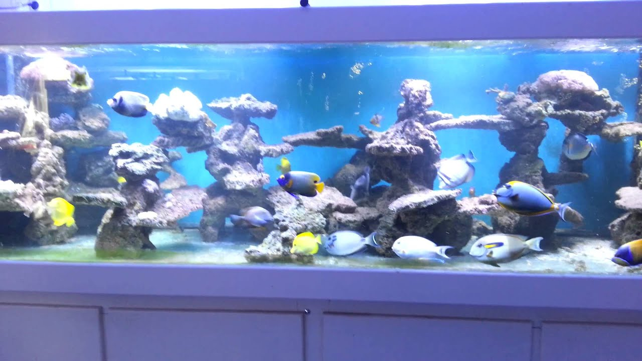 Saltwater aquarium fish only the image for Aquarium eau de mer