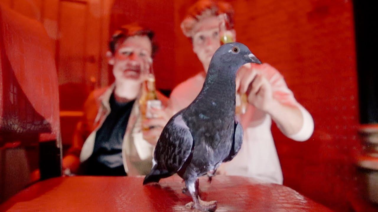 We Made a Pigeon an Influencer