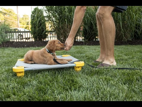 Puppy Training 101: Down/Stays, Managing Space, Tethering, Place and Calm Indoor Behaviors