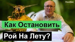 №120 Как Остановить Рой на Лету, Почему Рой, Пчелиный рой |  Пасека | Пчеловодство для начинающих