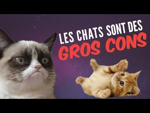 9 preuves que les chats sont des GROS CONS (qui nous veulent du mal)