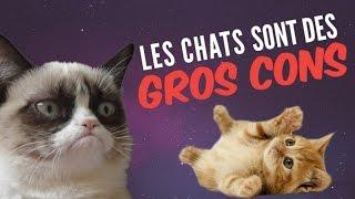 9 preuves que les chats sont des GROS CONS (qui nous veulent du mal) thumbnail