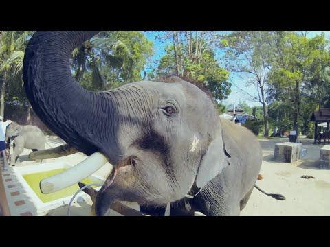 ТАЙНЫ КРАБИ. Реальный Таиланд | Слоники и горячие источники [Архив]
