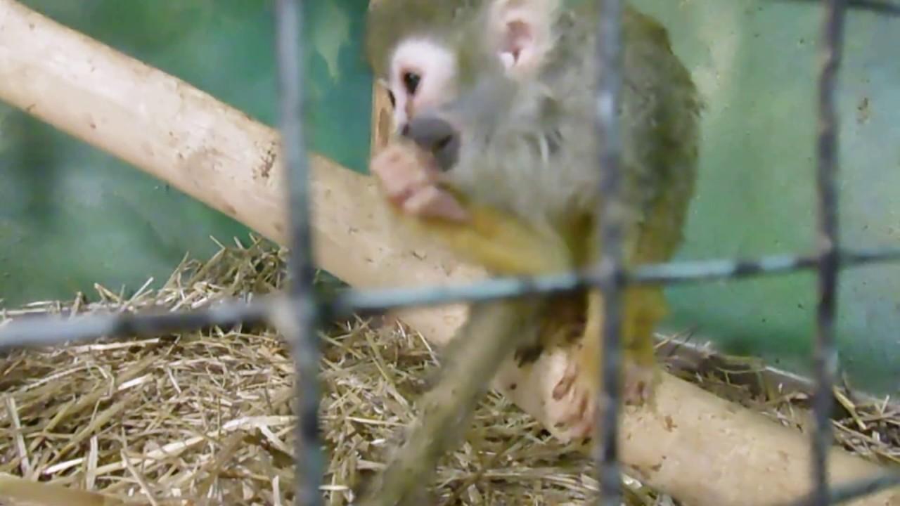 Крокус контактный зоопарк