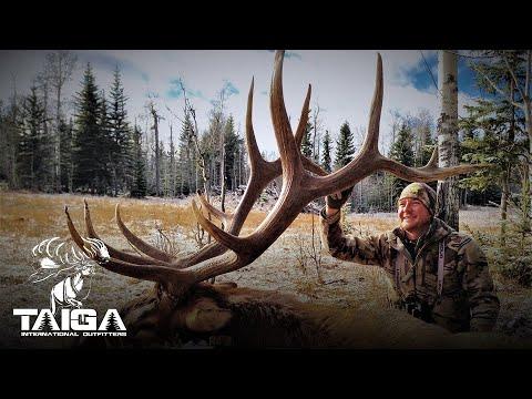 Rifle Hunting Southern Alberta Trophy Elk!