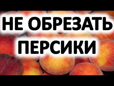 Вопрос: Нужно обрывать первые цветы и завязь у персика Что будет если оставить?