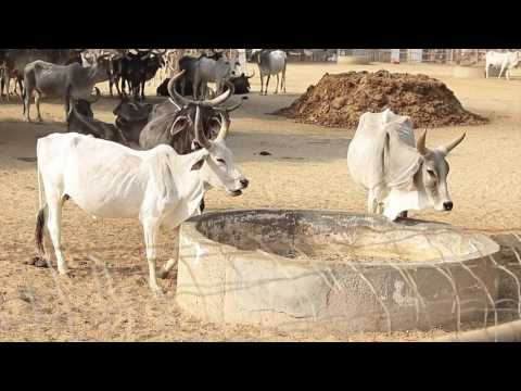 Gavyadhar Organic Pvt. Ltd. (Documentary Film)