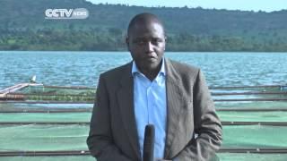 Cage Fish Farming In Uganda