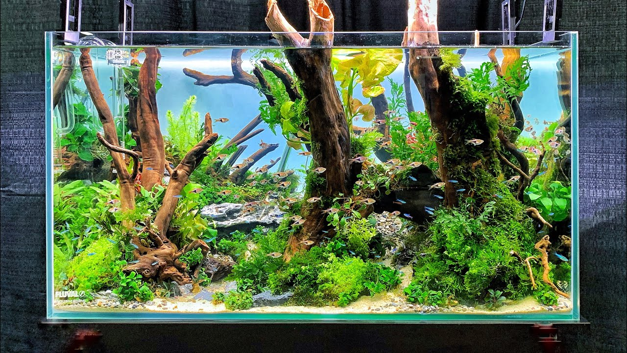 The Best Aquascapes At Aquatic Experience 2019 Youtube