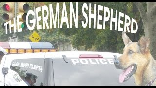 The German Shepherd - The Strangest Dog In The World - You Won't Believe This - Dog Love!