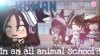 A HUMAN In An All ANIMAL School?!• Gacha Life Mini Movie•