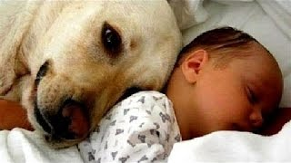 Koty I Psy Spełniające Dzieci Po Raz Pierwszy - Słodkie Zwierząt