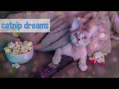 Crazy reaction to catnip  (Funny Devon Rex kitten tries catnip for the first time!)