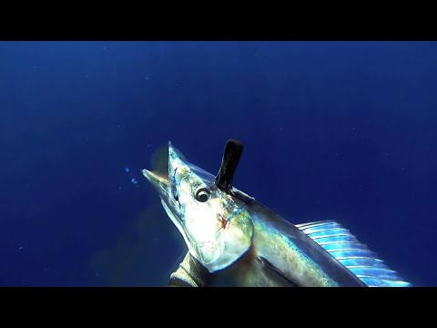 "Ukumulua Spearfishing Maui ""Blue Gold"""
