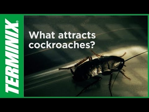 Is Terminix Good For Roaches