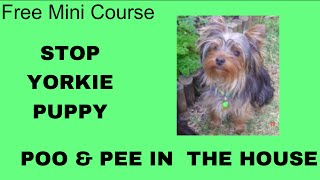 **WOW** Potty Train Puppy Yorkie Yorkshire Terrier- Free Mini Course on Potty Train Puppy Yorkie
