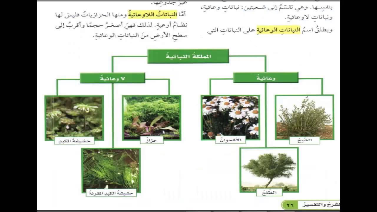 علم تصنيف النباتات pdf