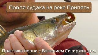 Ловля судака на реке Припять : Практика ловли с Валерием Сикиржицким