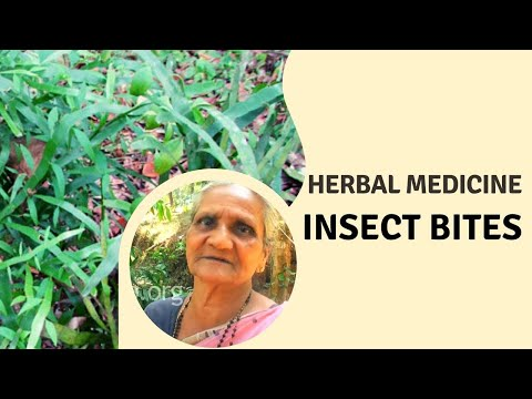 Herbal cure for insect bites