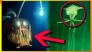 11 Af Havets Mystiske Væsner