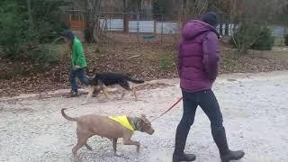 Emmie Lou Happy Dog Rescue
