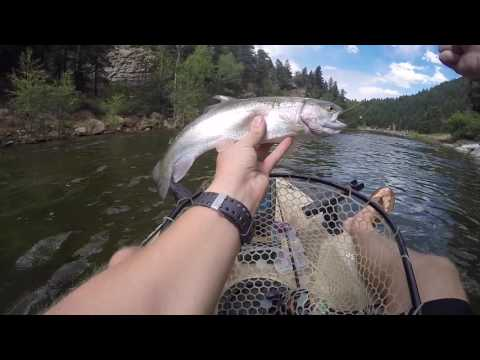 Fire Near Boulder! Rainbow Trout At Gross Reservoir