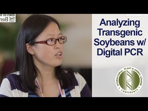 Analyzing Transgenic Soybeans PAGXXIII