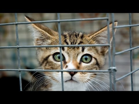 Where to Get a Cat | Cat Care