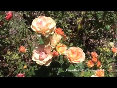 Relaxing Nature Break2: Beautiful Huntington Gardens; Roses, flowers and sounds of nature