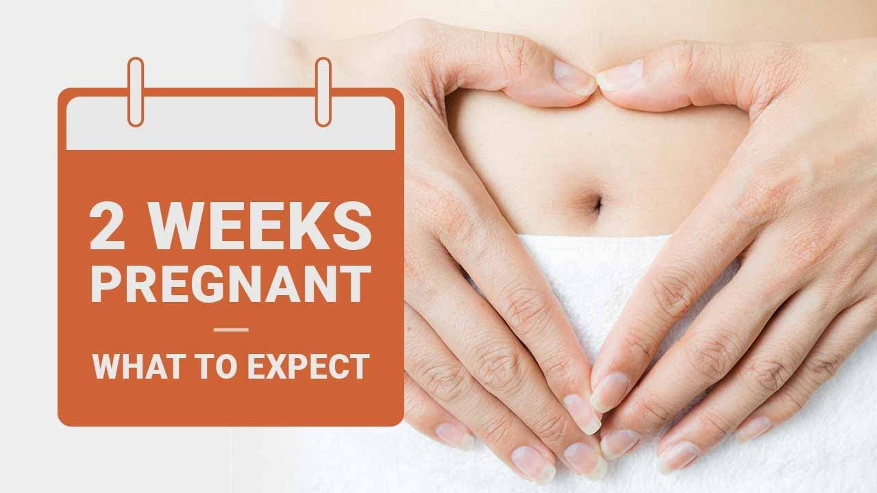 2 Weeks Pregnant: What to Expect
